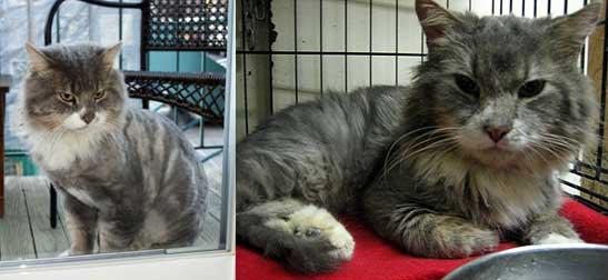 Cat-found-Petite-Patrie