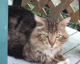 cat found on Brebeuf