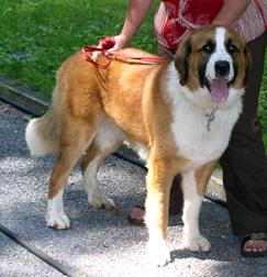 dog found in Saint-Lazare