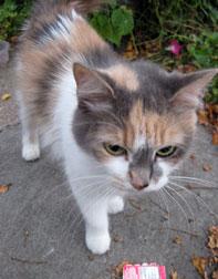cat found Ville-Emard