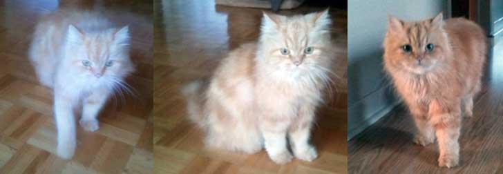 Cat found St-Marthe
