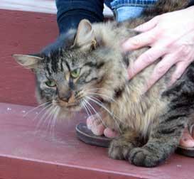 cat found Beaconsfield