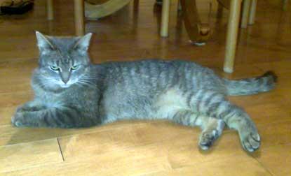 cat found in D.D.O.
