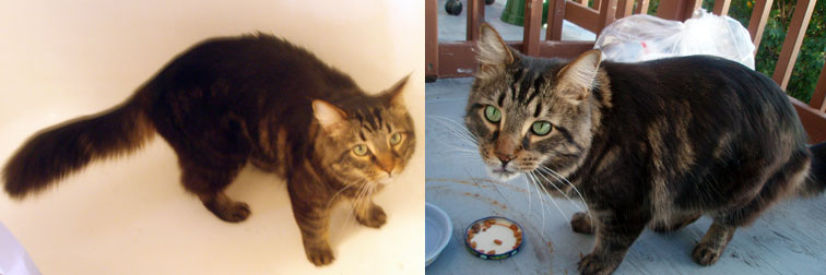 cat found Metro-Laurier