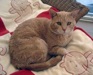 cat found St-Eustache