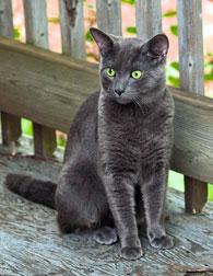 lost cat in Ville-Emard