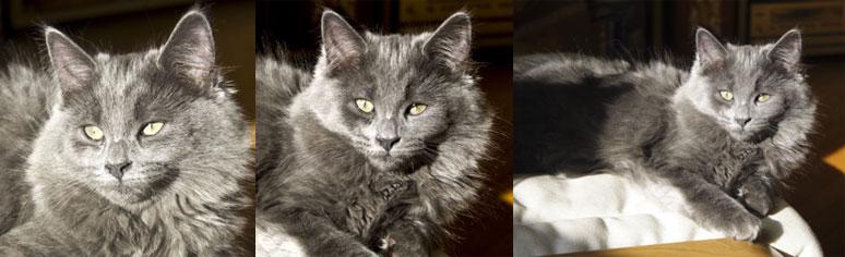 cat lost in Hochelaga