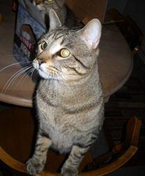 cat lost Hochelaga