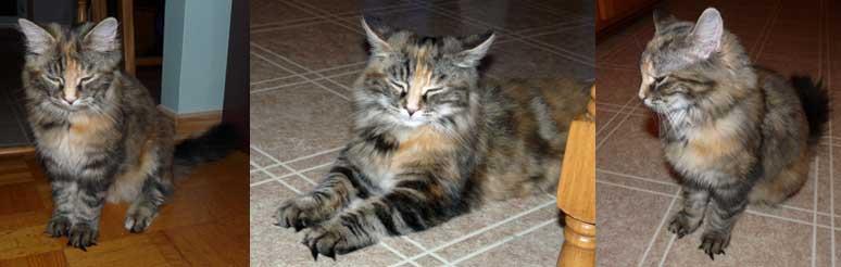 kitten found St-Basile-le-Grand