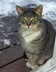 cat found Chateauguay