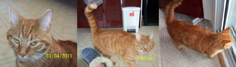 Cat found in Cartierville