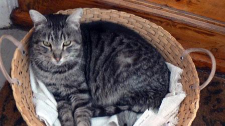 cat found N.D.G.