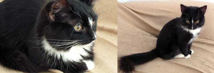 kitten found in Anjou