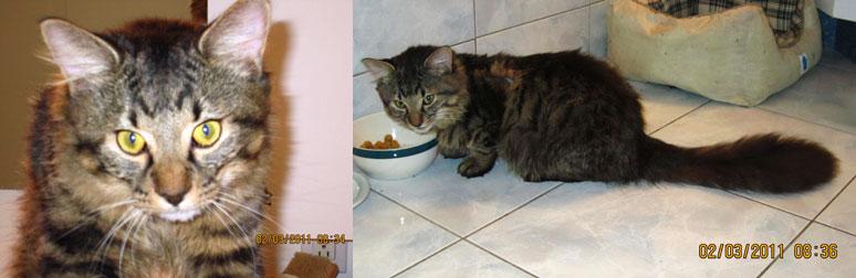 cat found Plateau