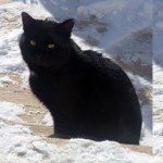 cat found Repentigny