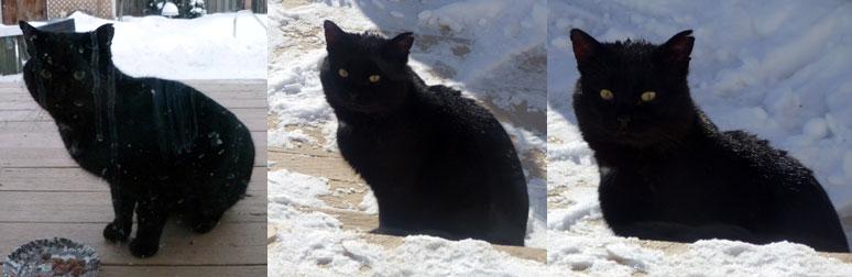 cat found Repentigny
