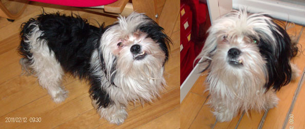 dog found in Longueuil