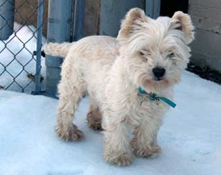 dog found in Baie-d'Urfé