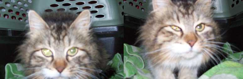 mother cat found in Ahuntsic