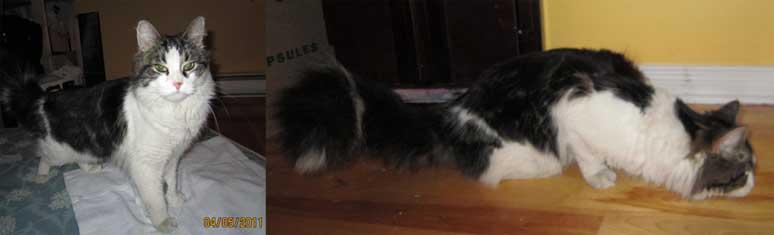 cat found Plateau-injured