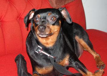 dog found Hochelaga-pin