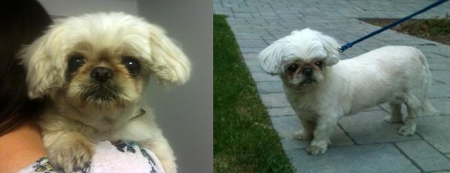 dog found in St-Henri