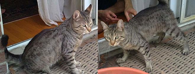 Cat found in TMR