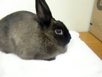 rabbit lost in Ile des Soeurs