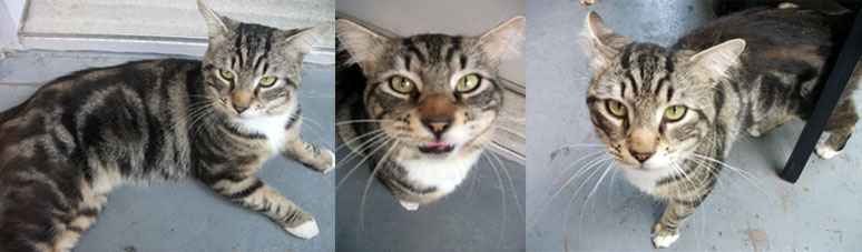cat found in Lemoyne