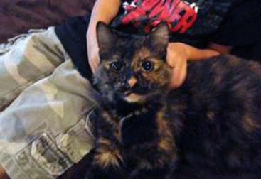 cat found in Saint-Leonard