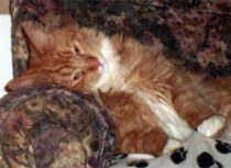 cat lost in Épiphanie