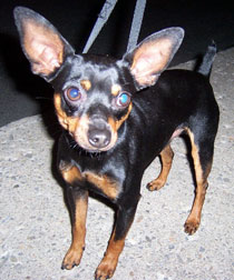 min pin found in Longueuil