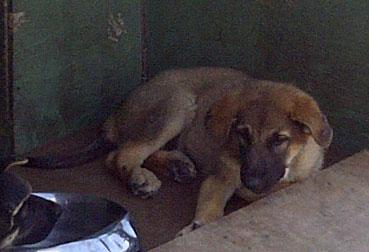 dog lost in Rivière-des-Prairies