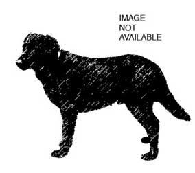 dog-x