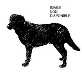 dog-xf
