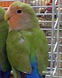 bird found in N.D.G.