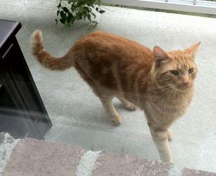 cat lost in Ste-Sophie