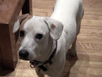 dog found in Plateau