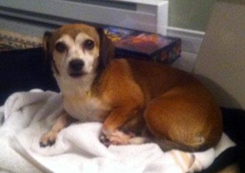 dog found in St-Alphonse-de-Rodriguez