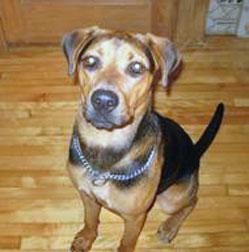 dog found in Ste-Martine