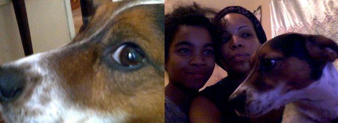 dog stolen - Jack russell