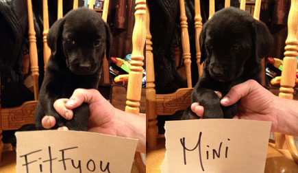 Fitfyou-and-Mini