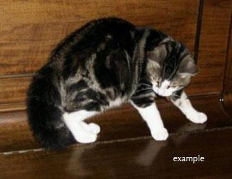 cat found in N.D.G.
