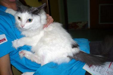 cat injured at SPCA