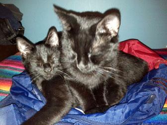 black cat lost in Ahuntsic