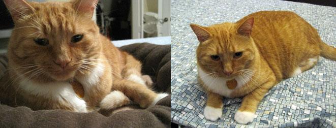 cat lost in cat lost in Blainville