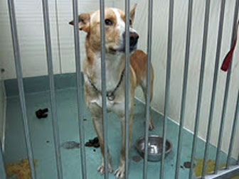 dog at SPCA - November