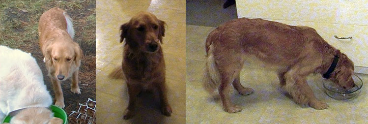 dog found in St Colomban