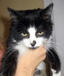kitten found in Deux-Montagnes