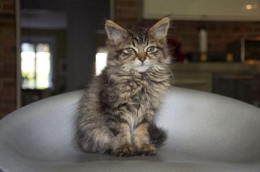 kitten found in Griffintown